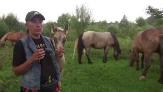 Выбор тяжеловозной лошади. На что обратить внимание.