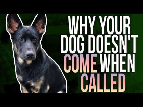WHY YOUR DOG DOESN'T COME WHEN CALLED
