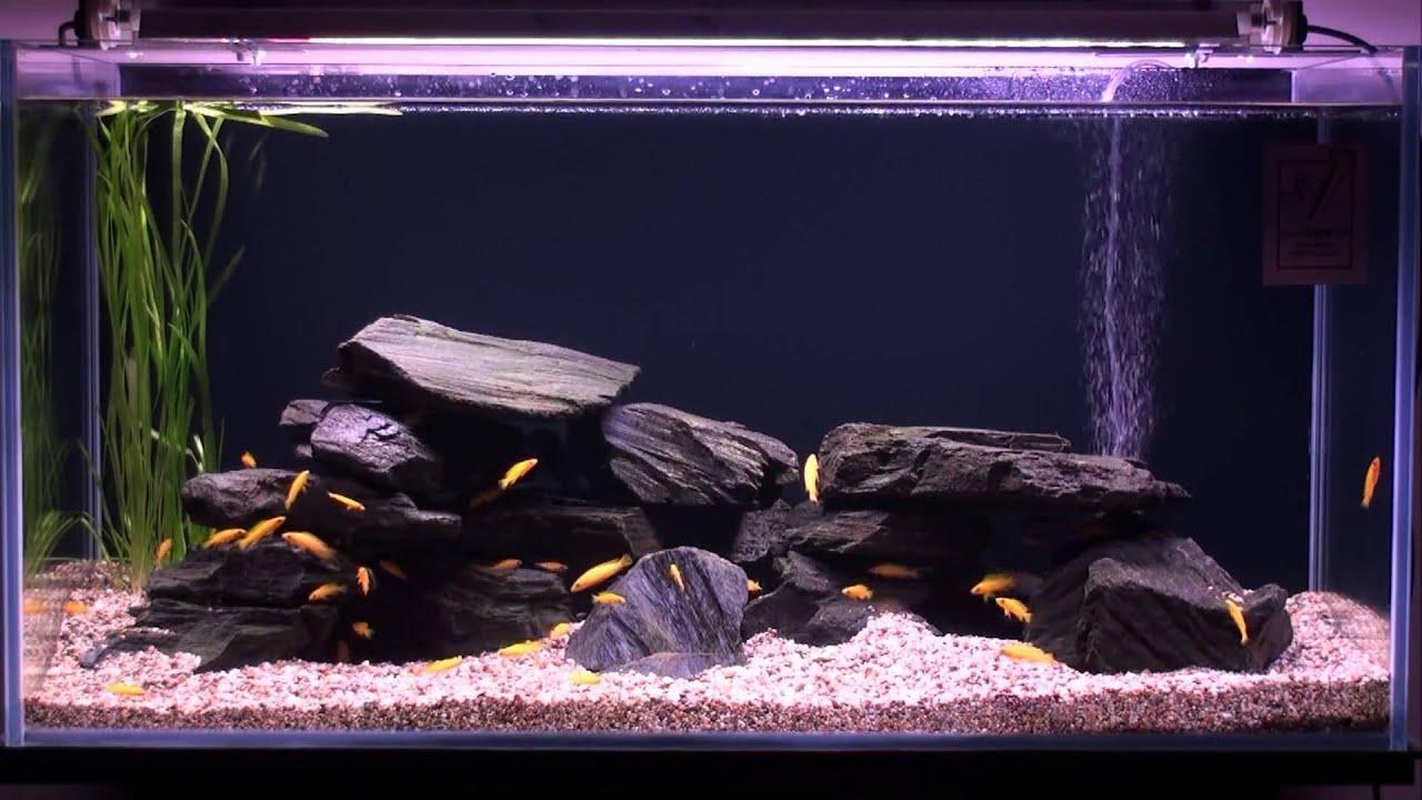 Sylvania grolux t5 floresan 24w 39w 54w youtube sylvania grolux t5 floresan 24w 39w 54w parisarafo Choice Image