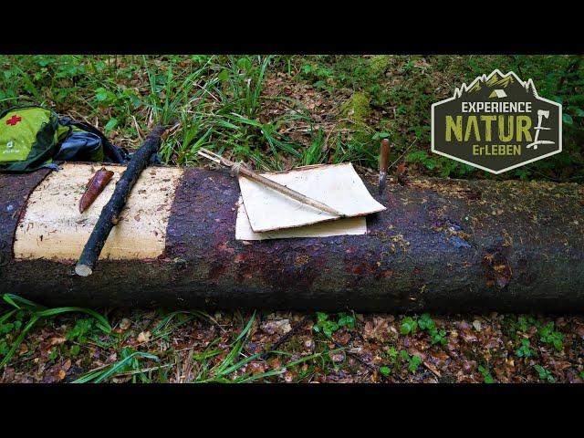 Rinde ernten / Rinde sammeln /Harversting Bark /Baumrinde richtig entfernen, die beste Jahreszeit!