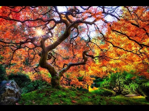 Top 10 Beautiful Botanic Gardens In The USA