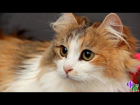 Вопрос: Почему кошка жоффруа так ценна Чем она питается?