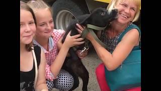 Волонтеры помогли собаке найти семью после наводнения
