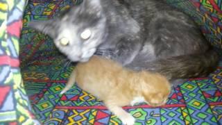 Кошка родила 1 котёнка)