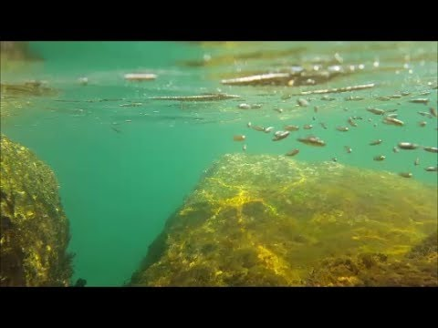 Snorkeling with the Galaxy S6 Active in Saltwater at the Beach