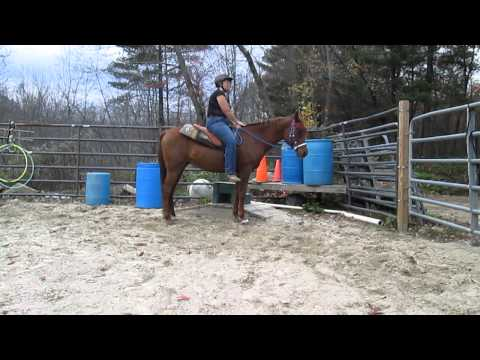 More Stand to be mounted practice with 12 year rescue Arab