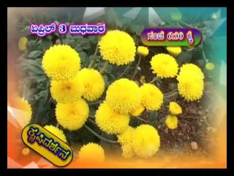 Krishidarshan Programs on DD Chandana | 03-04-19 | Promo