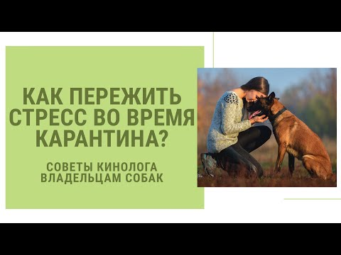 Как пережить стресс во время карантина? Советы опытного кинолога для владельцев собак!