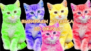 ВЫБИРАЕМ КОТЕНКА ПО ОКРАСУ  CHOOSE KITTEN BY COLOR