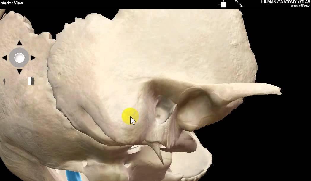 MASTOID ANTRUM BY DR SAMEH GHAZY - YouTube