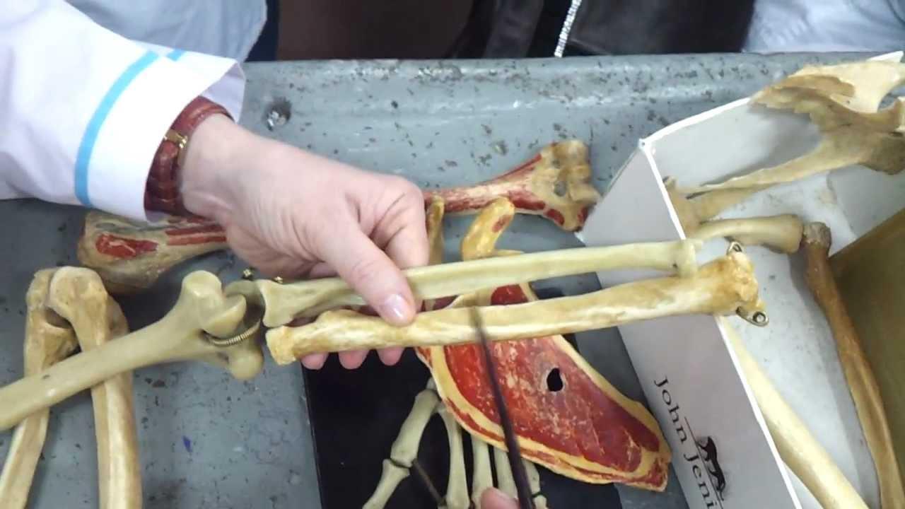 Урок анатомии на себе видео