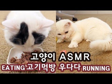 고양이 ASMR: 사슴고기 먹방, 우다다다 CAT ASMR: EATING VENISON, RUNNING