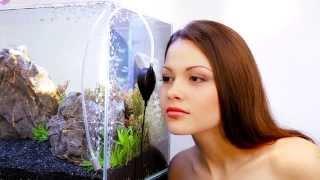 аPUMP бесшумный компрессор - Наслаждайтесь тишиной! - collar.ua(http://www.aqualighter.com/apump.html Компания COLLAR представляет бесшумный аквариумный компрессор aPUMP (ТМ AquaLighter). Подробнее..., 2014-01-20T11:09:14.000Z)