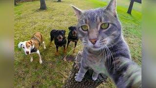 Смешные кошки 2019 Новые приколы с котам...