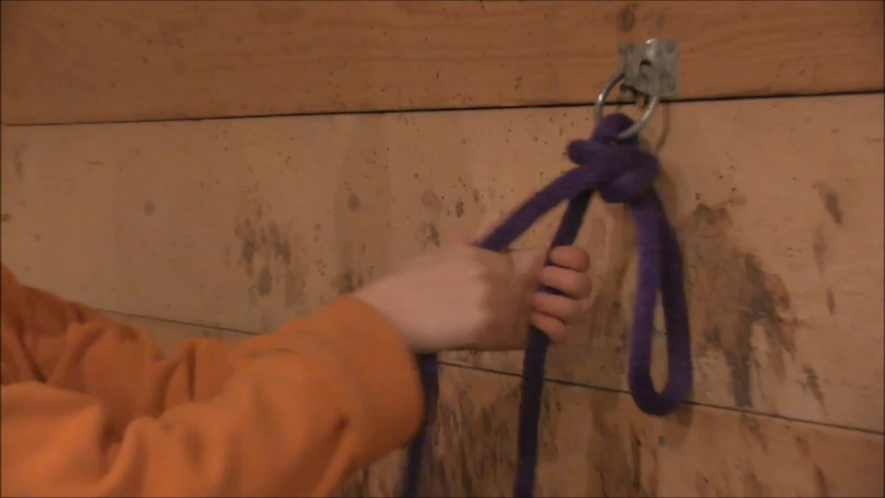 Stable Management Lesson 3-Tying a quick release knot