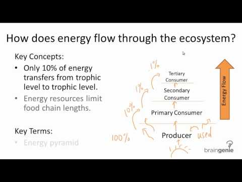 16.1.2 How does energy flow through the ecosystems