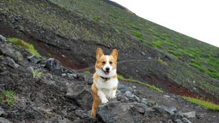 (4k Resolution Photo) June 2009 Goro@welsh Corgi [4096 X 2304]