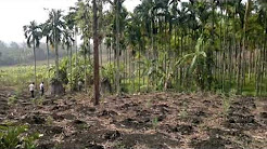 4 acre agricultural land for sale in pulpally .....price 40 lakh