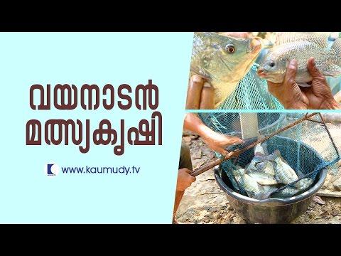 Huge Profit From Fish Farming   Haritham Sundaram   Kaumudy TV