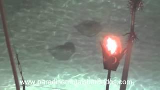 Barbados sea life