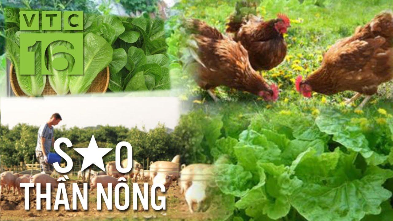 Nông nghiệp hữu cơ: Sau vất vả là thành quả ngọt bùi   VTC16