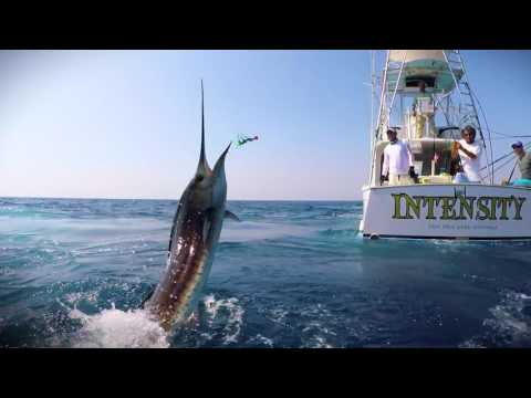 Drone Fishing Sailfish & Marlin Adventure Guatemala | GoFish Productions