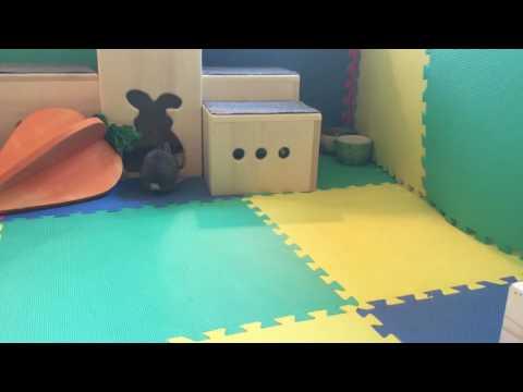 So Hoppy!  Baby Bunny Jumping