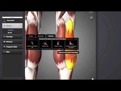 Elongación muscular parte posterior del tren inferior