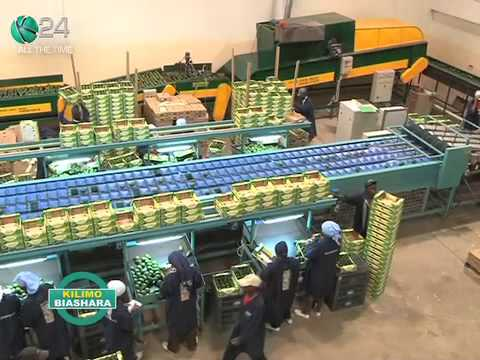 Kilimo Biashara :Export Market