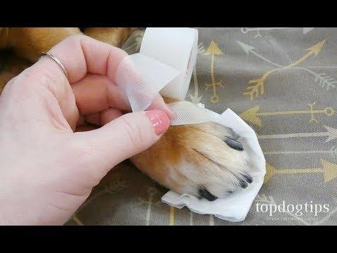 hqdefault - How To Get Super Glue Off Dog S Paw