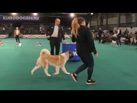 Kortrijk 2018 Sunday Best in Show
