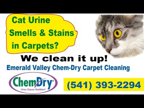 Carpet Cleaning Eugene How To Remove Cat Urine Smell From Carpet - (Get Rid Of Cat Urine Odor)