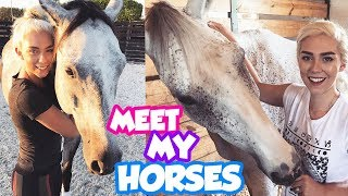 MEET ALL MY HORSES! Get To Know My Pets!