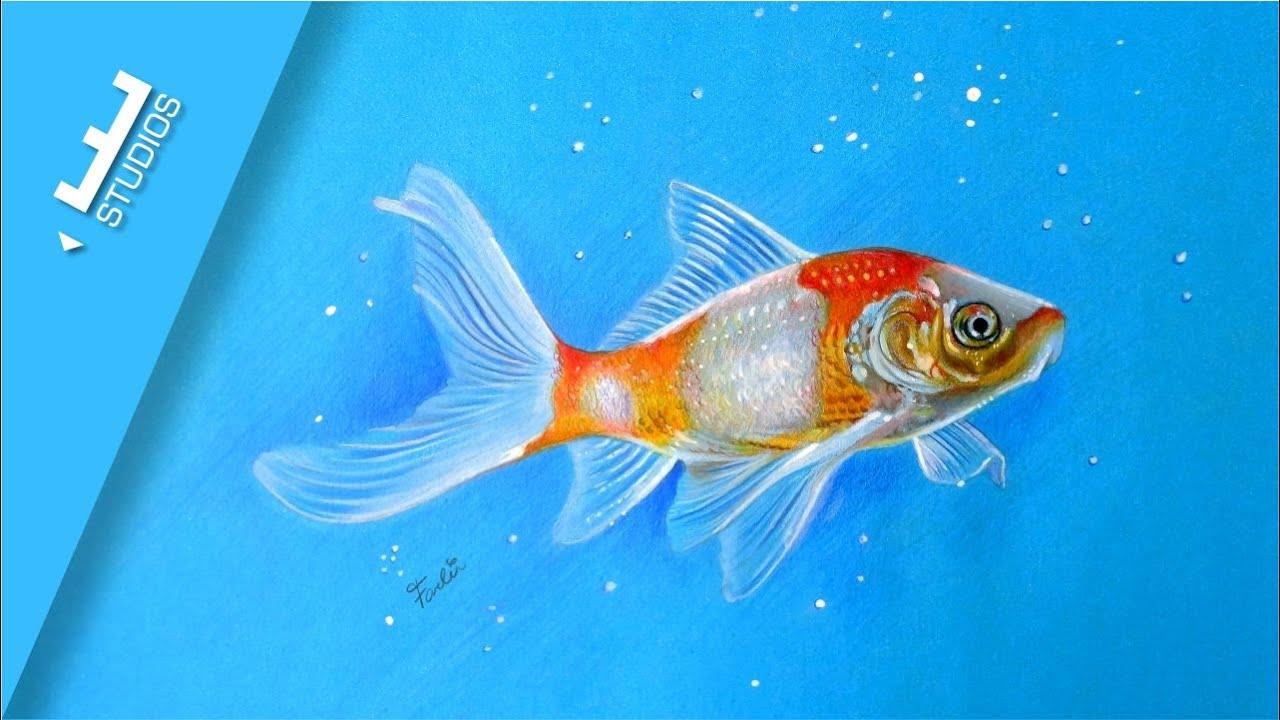 Desenho Realista De Peixe Colorido Realistic Drawing Fish Youtube