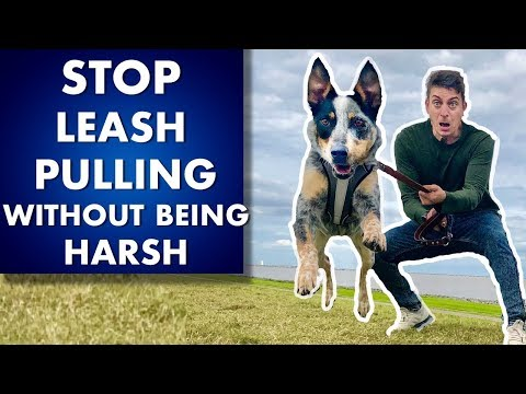 Leash Pulling Training: How To Train ANY Dog To STOP Pulling Without Being Harsh!