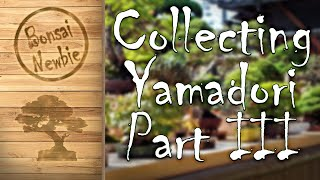 Collecting Yamadori - Part III: Collecti...