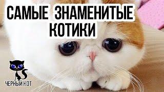 Самые знаменитые котики интернета  / Интересные факты о кошках