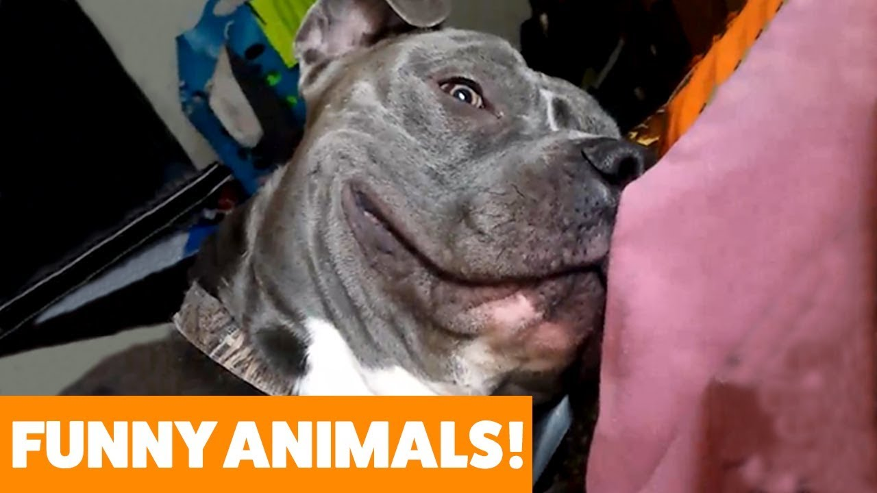 Adorable Pets You'll Just Fall In Love With! Funny Pet Videos 2019