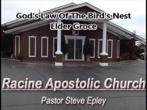 Gods Law Of The Birds Nest   Elder Groce