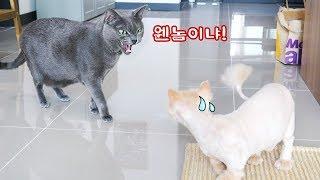 동료 고양이가 털을 싹 밀었더니 고양이들 반응