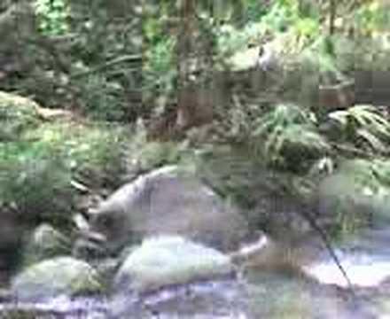 waterfalls in taiping, perak