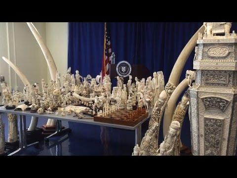 New York seizes $4.5 mn worth of elephant ivory items