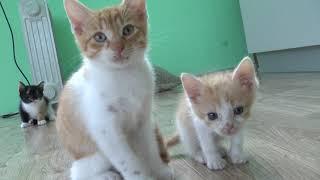 Волонтер из Анапы Оксана Муромская отдаст найденных котят в хорошие руки