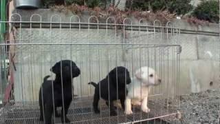 子犬が生まれていますよ http://www.woof.jp/lr.html.