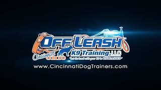 Dutch Shepherd Leo executing the Load Up Command at Cincinnati Dog Trainers Off Leash K9