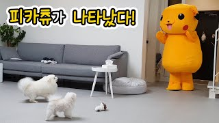 What Happens When A Puppy Meets Pikachu