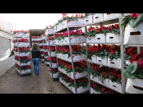 flower import
