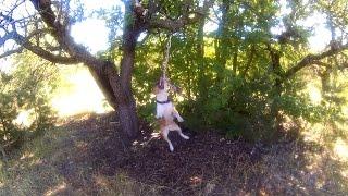 Тренировка бойцовской собаки