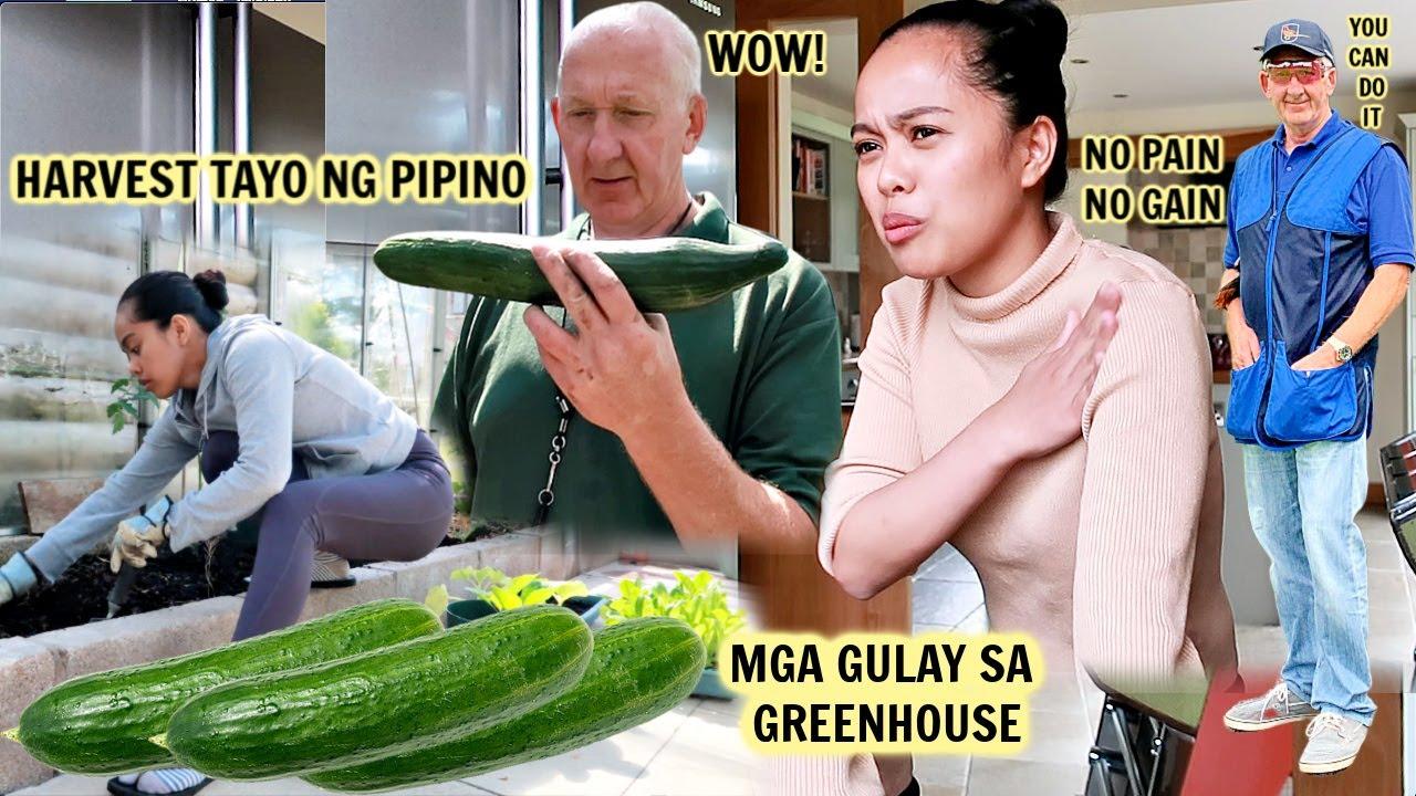 FILIPINO BRITISH:HARVEST NG PIPINO GULAY SA GREENHOUSE!NAG CLAY TARGET