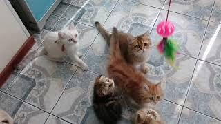 MOV 0002 белые котята + остальные
